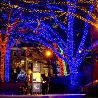 Visitors read an information board on the main alley of the National Zoo, decorated for the forthcoming holidays in Washington DC,  December 20, 2012.   AFP PHOTO/MLADEN ANTONOVMLADEN ANTONOV/AFP/Getty Images ORG XMIT: