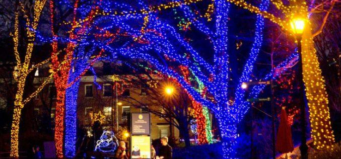 Lampu Hias Pohon Natal